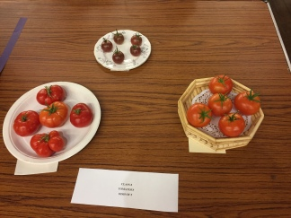 Class 8 tomatoes
