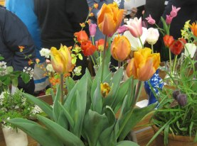 Tulips cropped 32