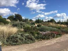 A Dry Garden