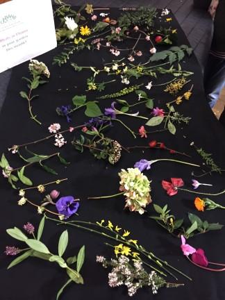 january flowers 1