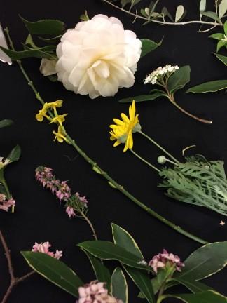 january flowers 2