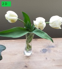 AN Tulips 2