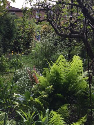 SC Garden 4